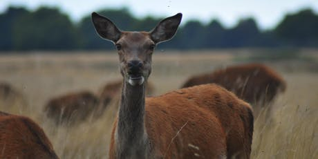 Nature Photography Workshop for Beginners - Richmond Park. tickets