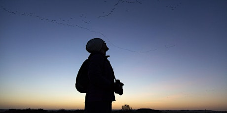 Pink-Footed Geese: Sunrise Walks tickets