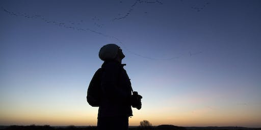Pink-Footed Geese: Sunrise Walks