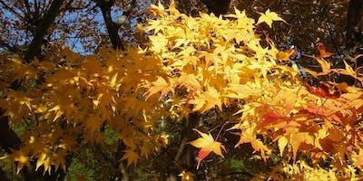5 Seasons of Money : Achieving financial wellness through Japanese seasonal living
