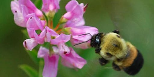 Pollinator Workshop hosted by the Ivy Creek Foundation