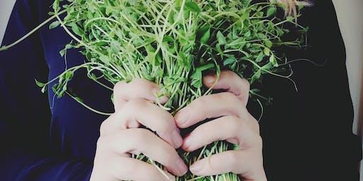 Les Pousses et germinations