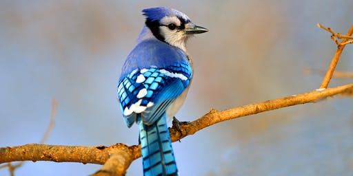 Introduction to Birdwatching Class - November 2-3