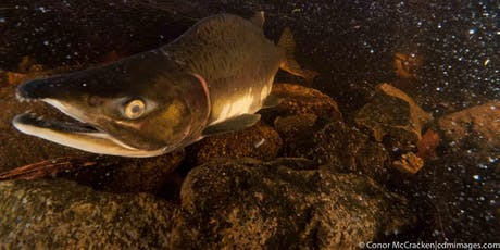 Climate Change and the Future of Salmon tickets
