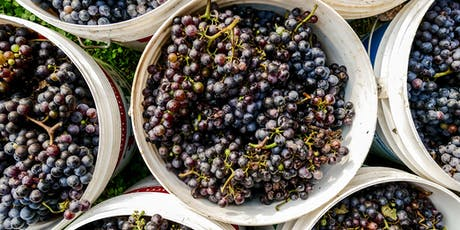 Viansa Harvest Party !  Fun for the  Family!  Music, Grapestomp, BBQ, Wine tickets