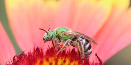 Native Bee Society of BC - Inaugural AGM 2019 tickets