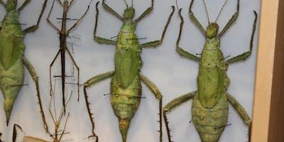Bradon's Advanced Insect Class