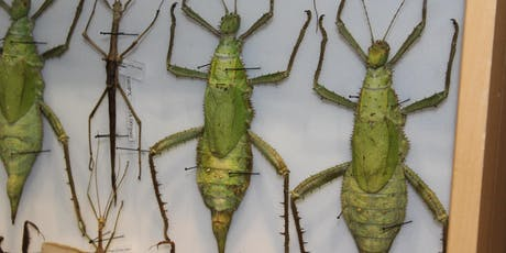 Bradon's Advanced Insect Class tickets