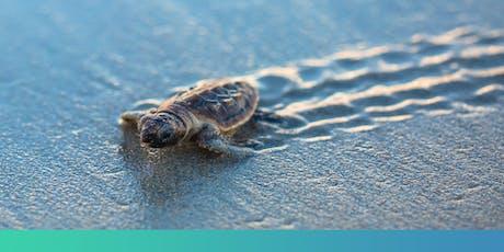 Mon Repos Turtle Centre – Community Day tickets