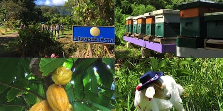 Cocoa Farm Tour and Chocolate Tasting tickets