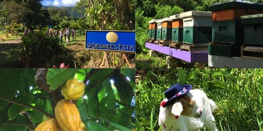 Cocoa Farm Tour and Chocolate Tasting