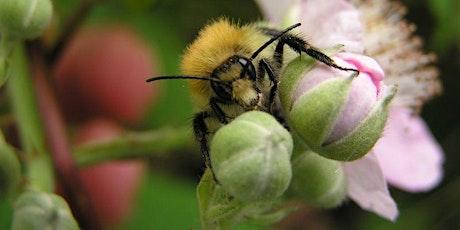 Beginners Bumblebee ID Day tickets