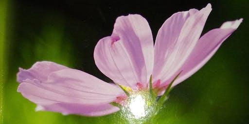 Pink Petals, A Focus on Healing