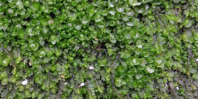Small is Beautiful Moss Walk at Chinnor Hill
