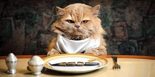 4TH Annual Kitten Ka Noodle Fundraiser