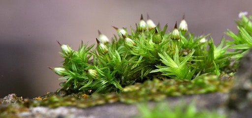 Small is Beautiful Moss Walk at Moor Copse