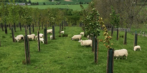 FAB Farmers, Pembrokeshire Agroforestry Learning Network
