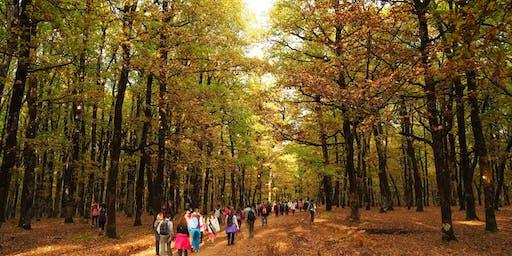 ActiveCultureHike Δρυοδασος Φολοης - Αρχαια Ολυμπια In-A-Day Autumn Edition