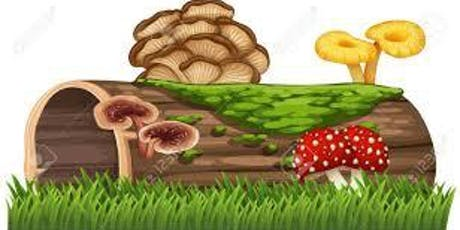 The Power of Mushroom Supplements! tickets