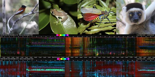 Wilderness technology: How bioacoustics can transform conservation.