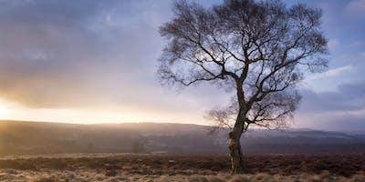 Photography Workshop: Landscape, Trees and Plants, Peak District