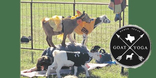 Halloween Goat Yoga!