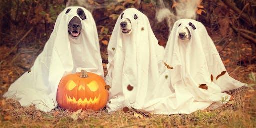 Halloween Evening of Mediumship at Danson Stables Bexleyheath