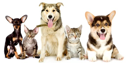 HOW TO HAVE A HEALTHY PET WITH DR. JUDY MORGAN