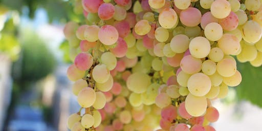 A Special Happy Hour w/ F&R Imports & Winemaker Sebastien Mann