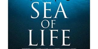 Sea of Life Documentary with Filmmaker Julia Barnes