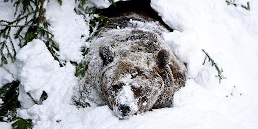Winter Hi-BEAR-Nation Party