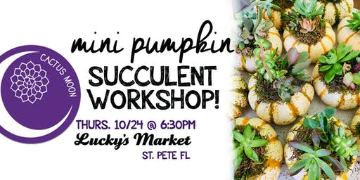 ST. PETE Mini Pumpkin Succulent Workshop