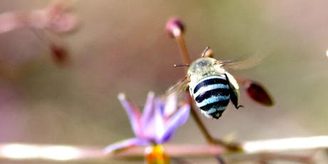 Pollinators at Westgate Park: citizen science workshop tickets