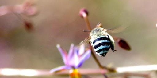 Pollinators at Westgate Park: citizen science workshop