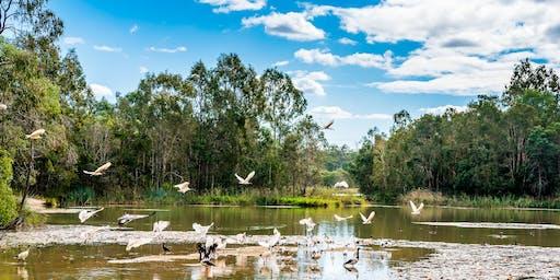 Guided Wetlands Walk