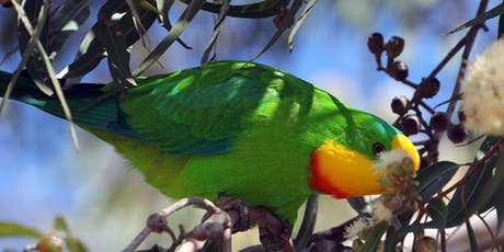 Breakfast with the Birds - North Wagga tickets