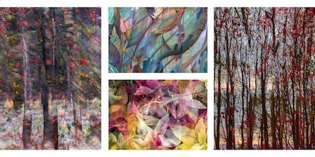 Autumn Impressionist Photography Workshop - Freda Hocking tickets