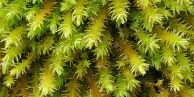 Small is Beautiful Moss Walk at Warburg Nature Reserve