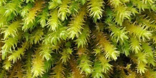 Small is Beautiful Moss Walk at Warburg Nature Reserve