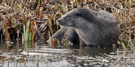Otter tracks and signs at RSPB Minsmere tickets