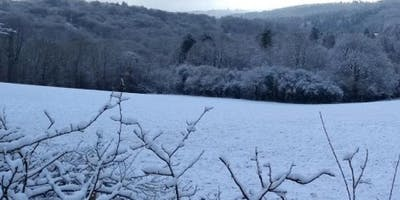 Explore Dancersend Woods in Winter