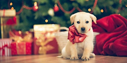 Puppy Christmas Party