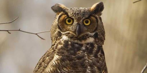 Owl Prowl - Session #2, Adults