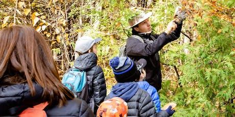 Coloris automnal dans la forêt Boucher tickets