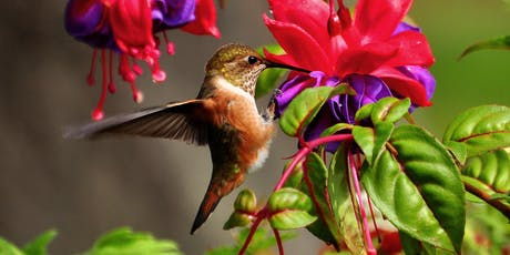 Native Plants and Hummingbirds tickets