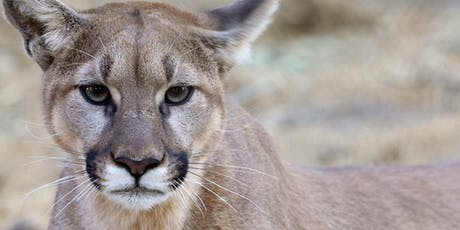 Wildlife Documentary Screening & Reception: California Mountain Lions tickets