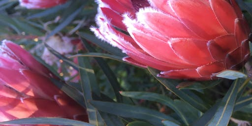 Create a Protea Floral Table Centrepiece