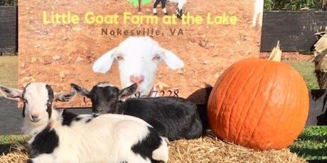 Baby Goats Feed, Play Bunnies, Alpaca Free Pumpkins! tickets