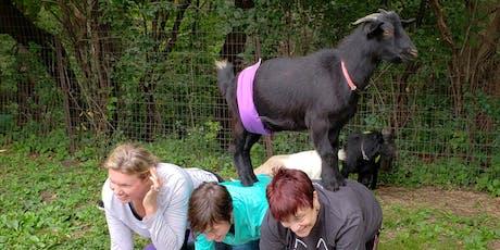 Third Season Goat Yoga Opener! tickets