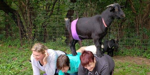 Third Season Goat Yoga Opener!